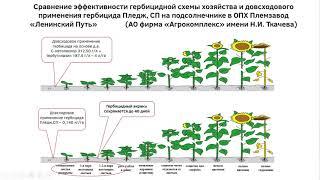 """Гербицид """"Пледж"""" -обучение в АХ""""Кубань"""""""