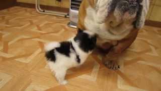 詳しくはhttp://www.pets-hop.comまで.