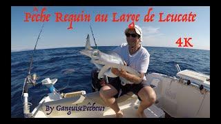 Pêche Requin Leucate Juin 2017 4K