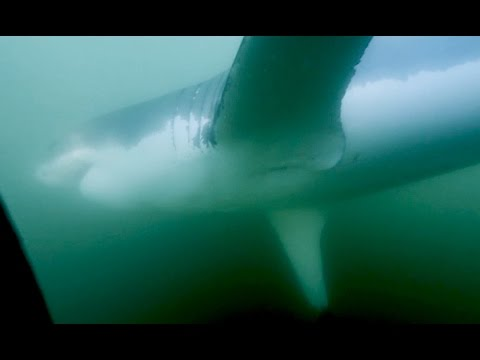 Mossel bay shark cage 360
