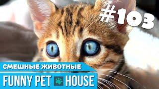 СМЕШНЫЕ ЖИВОТНЫЕ И ПИТОМЦЫ 103 АВГУСТ 2019 | Funny Pet House