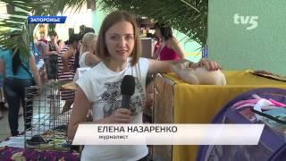 В Запорожье состоялась выставка кошек