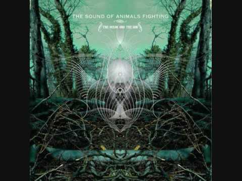 I, The Swan - The Sound of Animals Fighting