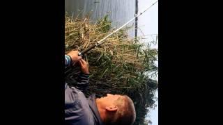 Трофейная рыбалка в Вилково(, 2014-10-07T08:00:26.000Z)