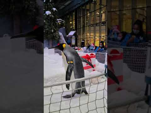 Ski Dubai 2020 Penguins