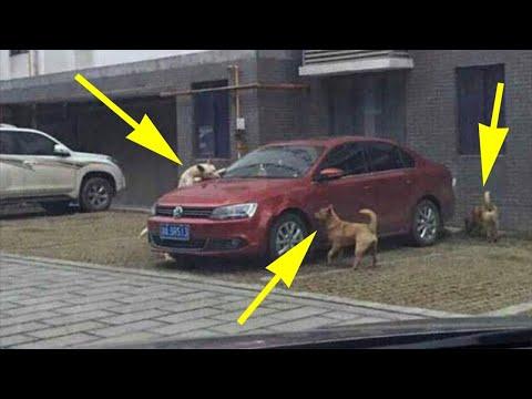 Выходя из машины, он пнул бродячего пса. Но когда вернулся, застыл на месте...