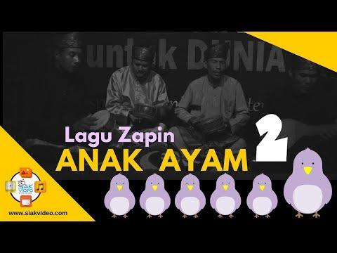 Live LAGU ZAPIN ANAK AYAM . . . . . 2