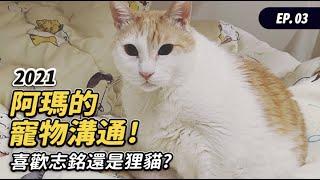 【2021阿瑪的寵物溝通喜歡志銘還是狸貓】#寵物溝通 EP.3 志銘與狸貓