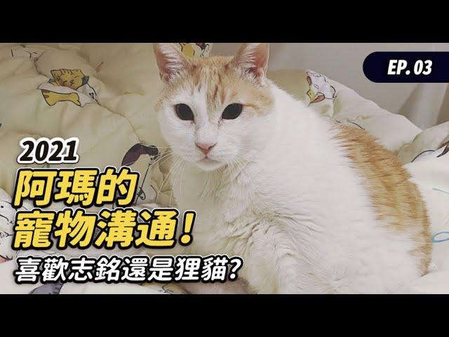 【2021阿瑪的寵物溝通!喜歡志銘還是狸貓?】#寵物溝通 EP.3 志銘與狸貓