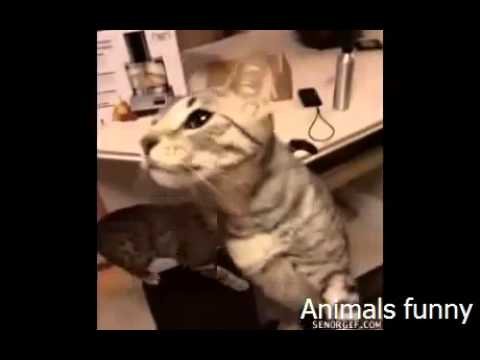 animals funny videos 2015 for kids   dogs and cats - Funny Baby Videos 2015 | funny kid videos 2015