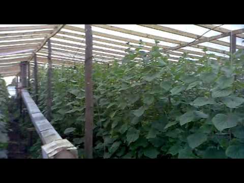 видео: 22052011 Демьяновка.