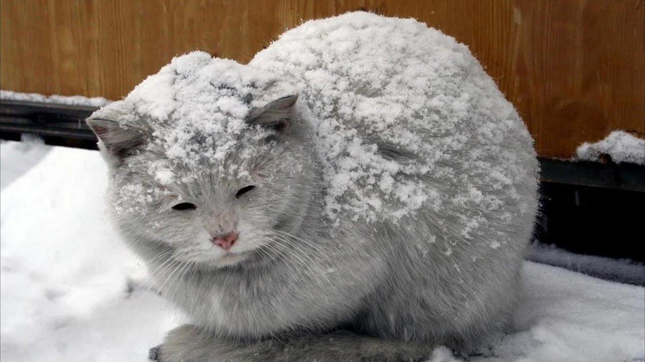 Серый кот зашёл в подъезд, чтобы погреться. Он плакал от голода, а жильцы хотели выгнать его прочь - скачать с YouTube бесплатно