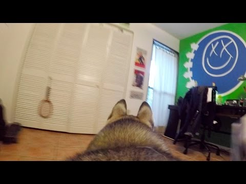 GoPro Camera on my Husky Left Home Alone!
