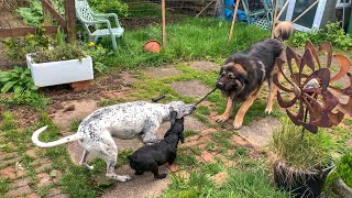 Typhon, Heaton and Jess: Tug-of-war.