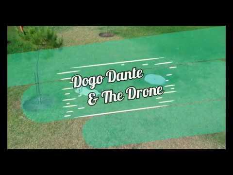 Dogo Argentino Dante: Puppy & The Drone - YouTube