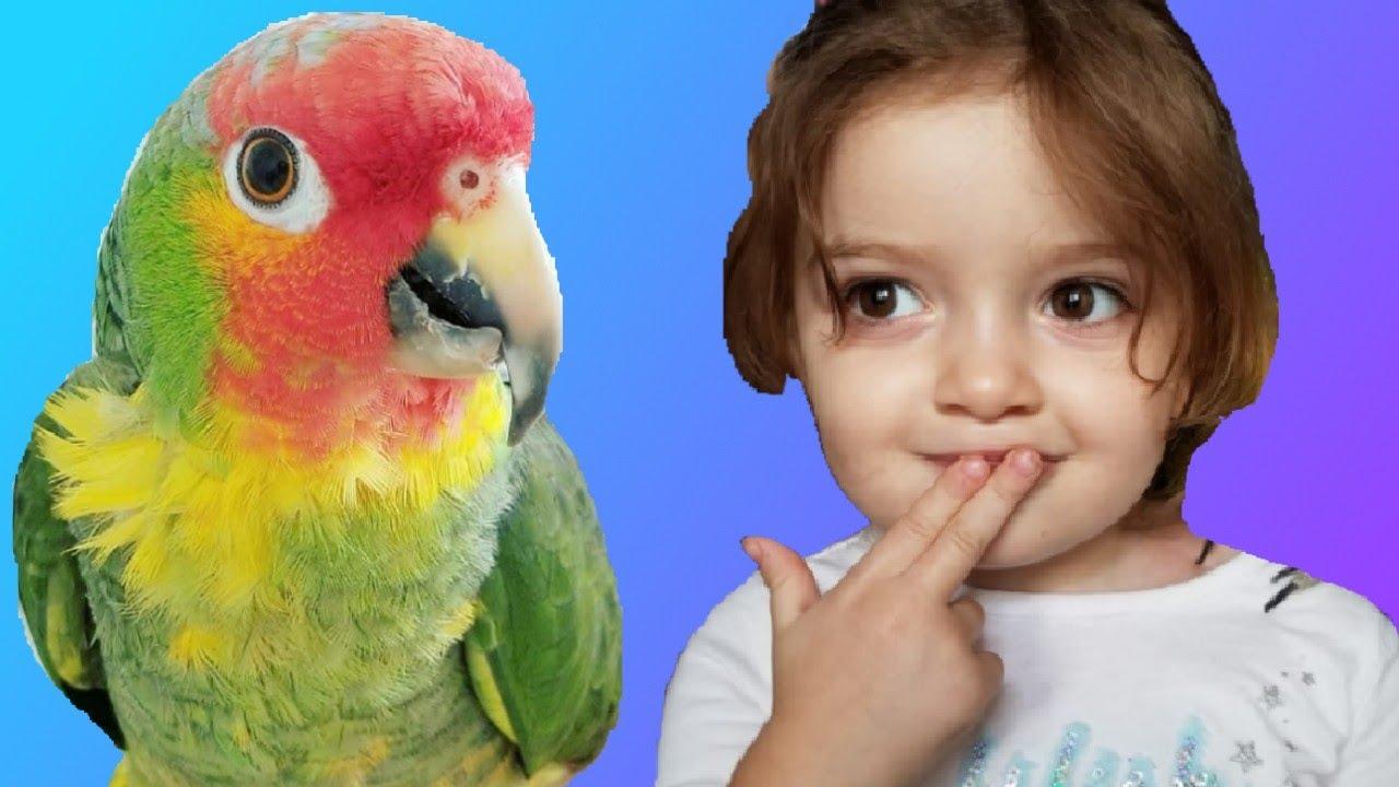 tablă de deparazitare macaw