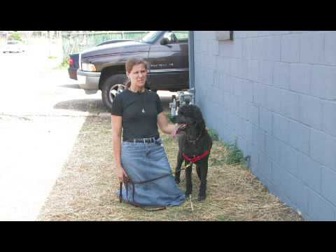 How to Keep Dogs & Cats Out of Flower Beds