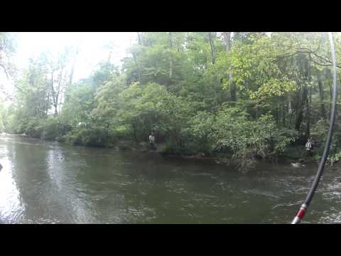 7/11/15 Tellico River Trout Fishing
