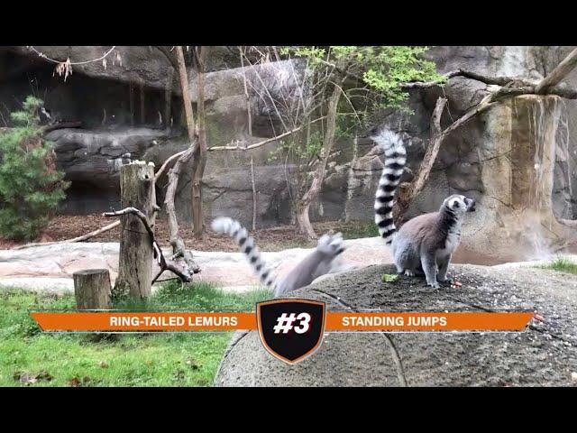 Detroit Zoo | DZS News: Episode 17