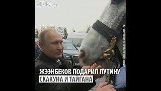 Жээнбеков подарил путину скакуна и тайгана