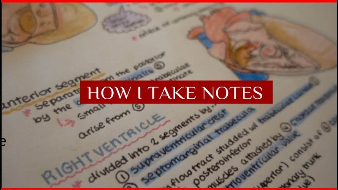 How I Take Notes in Medical School // Anatomy