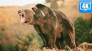 Средства защиты от нападения медведя, обзор того, что мы возим с собой