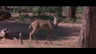 Пьяные животные и дерево Марупы....