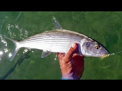 Whipping Boners AKA. Fly Fishing For Bonefish. Key West Backcountry