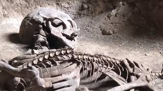 Taylandda  bulunan dev insan iskeleti