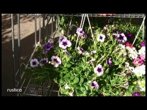 fleurs d ete et vivaces pour jardinieres au soleil