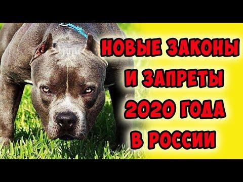 Вопрос: Примут ли в 2020 году закон о налоге на домашних животных?