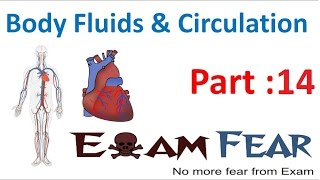 Biology Body Fluids & Circulation part 14 (Human Heart, value) CBSE class 11 XI