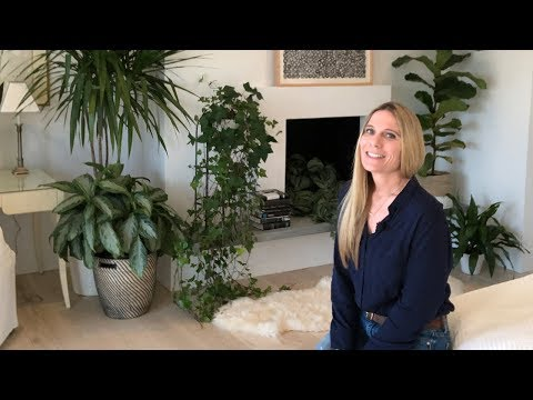 AIR PURIFYING INDOOR PLANTS FOR THE BEDROOM