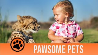 Pawsome Pets Episode Two