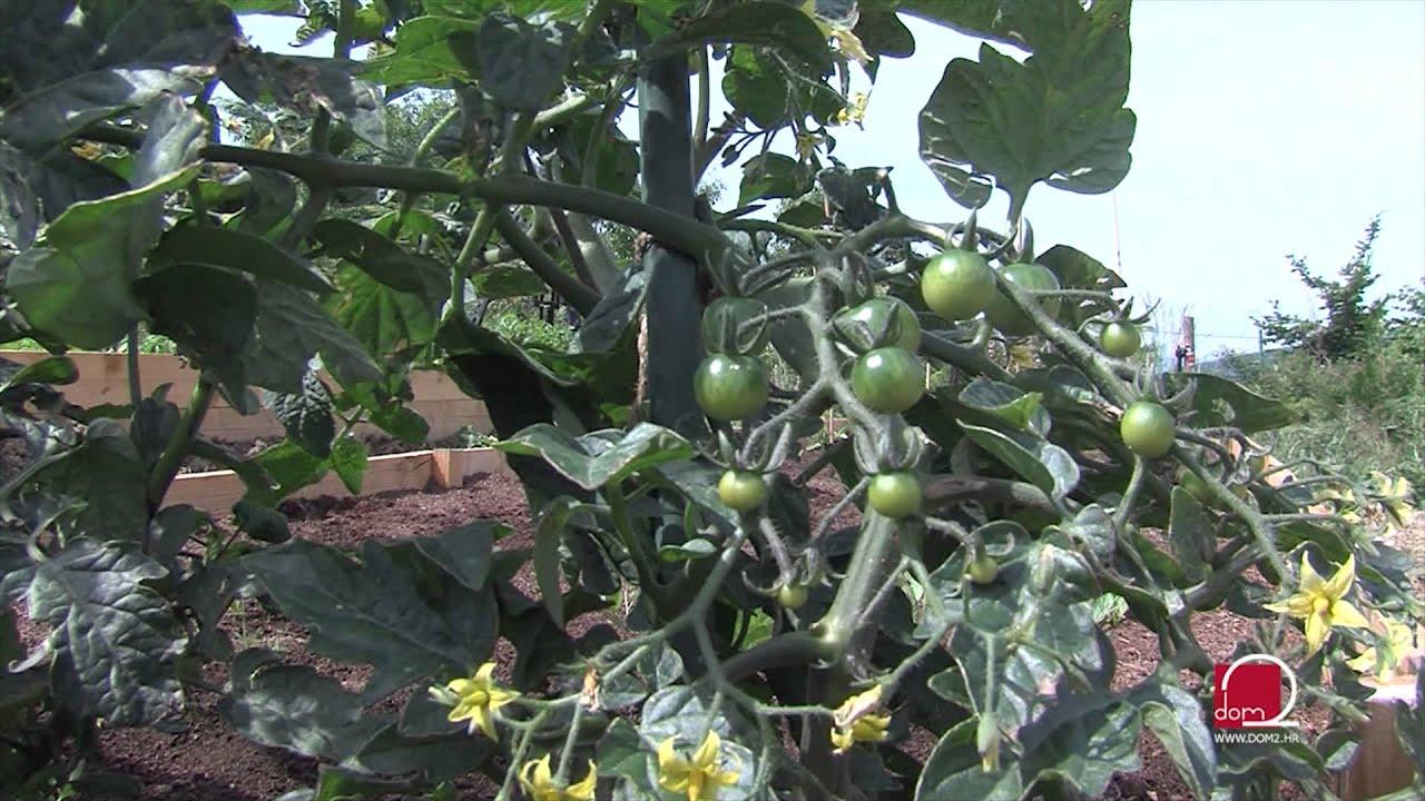 Savjeti za uzgoj organskog vrta - YouTube
