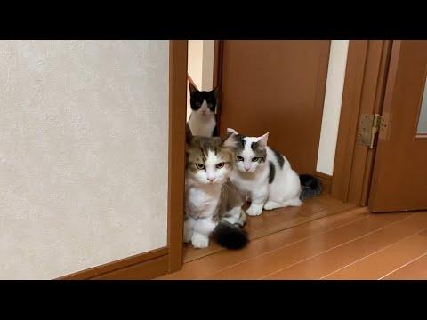 工事現場の騒音にビビる猫がかわいい-cute-cats-surprised-by-noise.