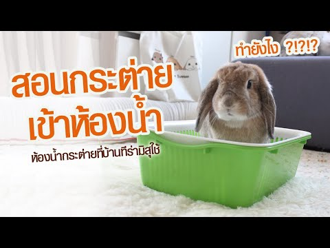 สอนกระต่ายเข้าห้องน้ำกับบ้านTiramisuBunnies RabbitLitterBox