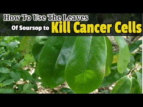 How To Use The Leaves Of Soursop to Kill Cancer Cells