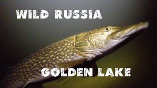 Золотое озеро Телецкое. Алтай. Altai. Golden lake Teletskoye. Сибирь. Дикая природа Алтая. Siberia