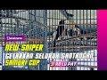 Samuri Cup Murai Batu New Sniper Tembakannya Getarkan Seluruh Gantangan  Mp3 - Mp4 Download