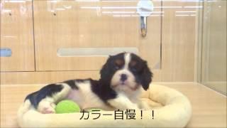 港北NT店では珍しいキャバちゃんの登場です☆穏やかで社交的な性質!小さ...