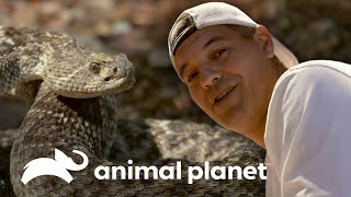 Oso pardo y serpiente cascabel acechan a Frank | Wild Frank en California | Animal Planet