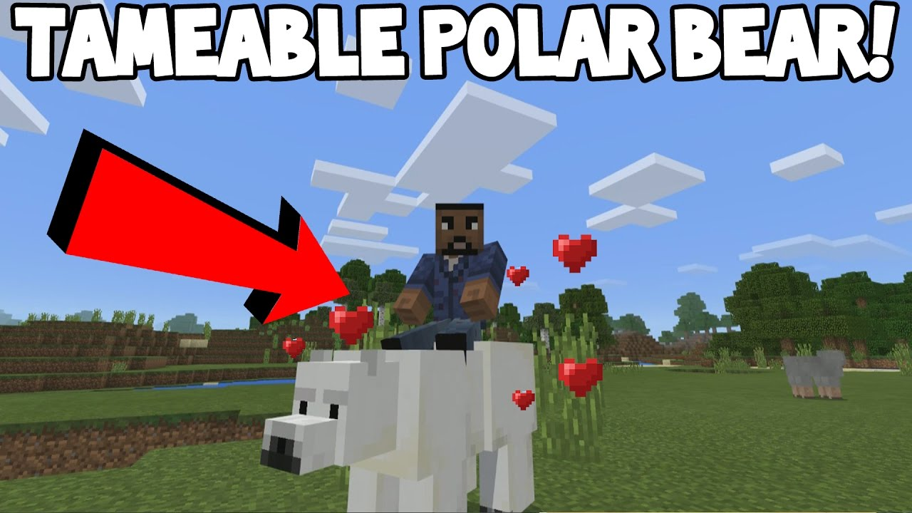 How To Tame A Polar Bear In Minecraft Pocket Edition Minecraft Addon Feature Youtube