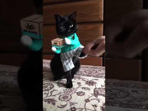 黒猫の宅急便♪