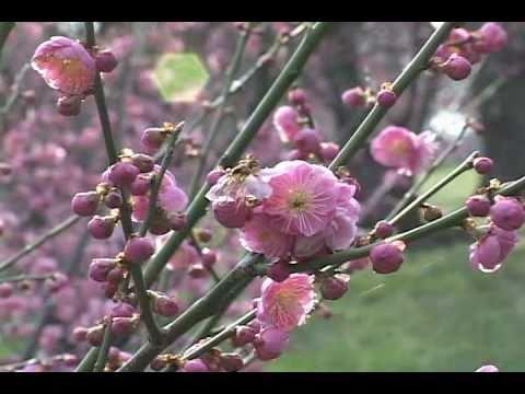 Nhạc Hoa NTD - Thiên Địa Hành - Hòa tấu đàn tranh
