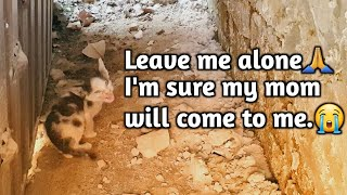 Rescue Lonely Kitten Was Waiting For His Death | Happy Ending | Animal's Cottage  Rescue Center