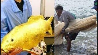 Đi đánh cá bắt gặp con vật dát vàng sáng lóe dưới sông, người đàn ông bất ngờ đổi đời sau 1 đêm