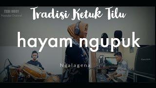 Download Mp3 Hayam Ngupuk - Gaya Jaipongan Ketuk Tilu Pake Keyboard || Tedi Oboy