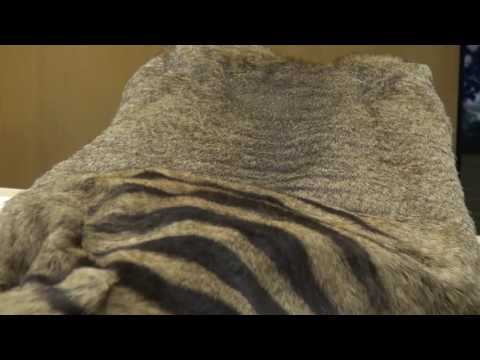 SOUTH AUSTRALIAN MUSEUM - Thylacine Collection