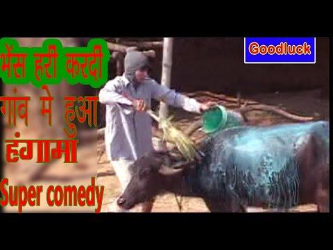 भैंस हरि करदी 150 रुपए मै (Bano Ka Diwana )कामेडी सीना =Umar Ali
